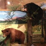 Wildlife museum at the Lodge