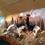 One of the exhibits at the wildlife museum at the Lodge
