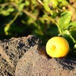 Limones!