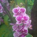 Flower in Balinese Pavilion