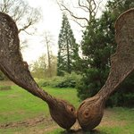 Sycamore sculpture