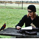 Rosella joined the picnic