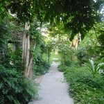 Way to the garden