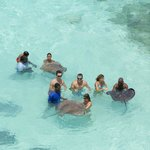 Guests and Guides with the Stingrays