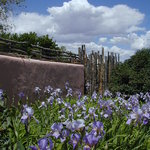 Iris' and that blue sky -- Spring at Inn