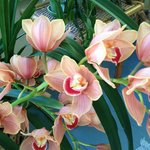 Beautiful orchids on the front porch