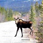 moose pass through the area.