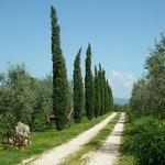 Ingresso tra gli oliveti