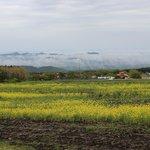 a sea of clouds & rape blossoms - 2