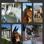 Horses and other pets with us...