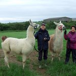 Us with our llamas