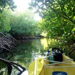 kayaking through the mangroves, nearby Surfsong at Hans Creek