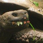 Onsite tortoises!