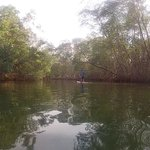 Stand-up paddle boarding through the mangrove trees on my day off