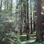 Montgomery Woods -- hanging valley