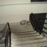 el perro del hotel