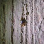 Villa Esthela bed bug- Antigua- taken 10:48pm April 29th