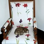 This is not a real cat! Chair in the hallway.
