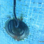 Exposed wires IN the pool.