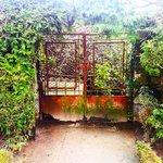 An old door in the garden