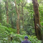 In the Cloud Forest a clearing.