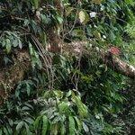 a trip through the rainforest