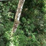 beautiful green rainforest