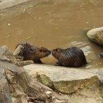 Kissing beavers :)