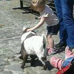 Newbridge Farm goat