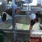 Those are cheese curds. The head cheese maker starts his day at 3am.