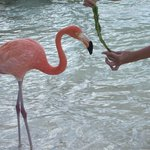 Flamingo;s ..on the Private Island