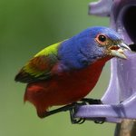 Mail painted bunting