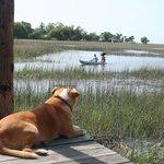 Sassy waiting foe kayakers to return