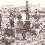 L'histoire de la vigne et du Languedoc