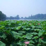 New Sand Island of Hangzhou
