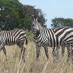 Uganda Safari Day Tours Photo