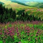 Nanshan Baiyanggou Scenic Area-Juhuatai Grassland