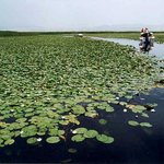 Lotus Lake of Korla