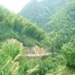 Qianjiangyuan National Forest Park