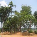 Environment around Kudajadri