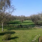 View across the orchard - spend time on a blanket in the sun here!