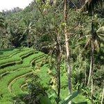 Trip to Ubud/volcano/coffee plantation