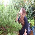 Rosemary - Garden