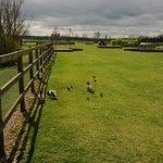rand farm