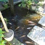Fish pond at the entrance