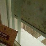 Black Mold on Shower room