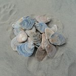 spend time collecting oyster shells