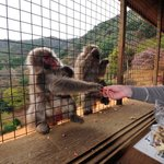Monkeys on the outside are being fed