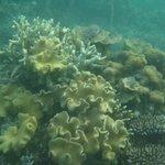 Coraux dans la baie