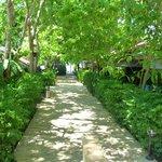 Jungle walkway through resort to the beach